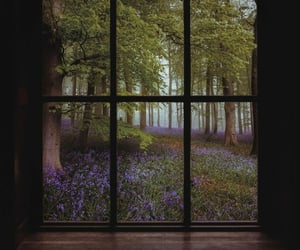 forest and window image