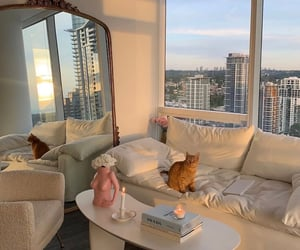 cat, interior, and view image