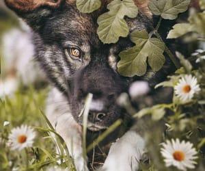 animal, animals, and botany image