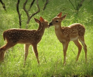 deer, fawn, and softcore image