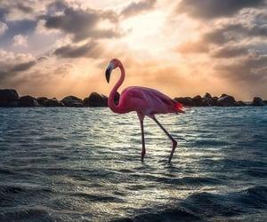 bird, flamingo, and holiday image