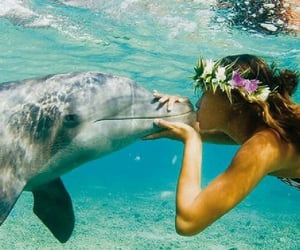 beach, flowercrown, and dolphin image