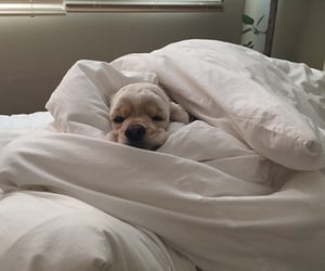 animals, bed, and puppy image
