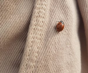 🐞 ladybug on my jeans my step-sister photographed the other day 🐞 (my pic)