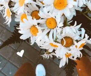 elegant, flowers, and girls image