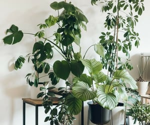 plant plants, نبات نباتات, and نباتات ظل image
