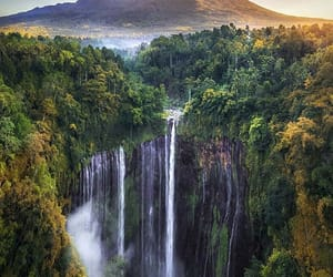 indonesia, jungle, and travel image