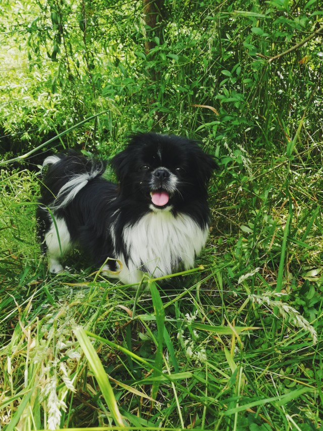 dog, aesthetic, and animals image