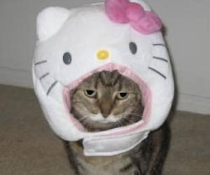 cat, hello kitty, and cute image