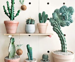 cactus, plants, and decor image