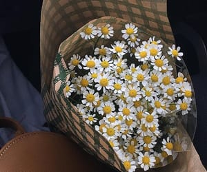 flowers, daisy, and bouquet image