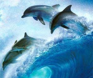 δελφινια image