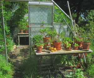 background, garden, and plants image