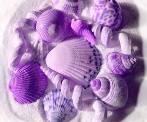 purple, beach, and shell image