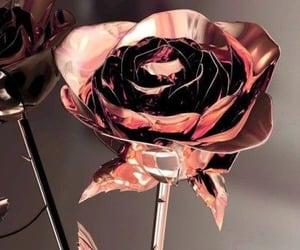 aesthetics, rose, and background image
