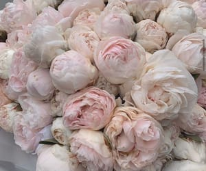flowers, fashion, and peonies image