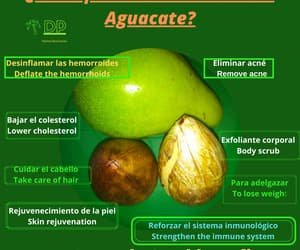 aguacate, avocados, and palta image