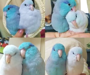 birds, parrot, and blue image