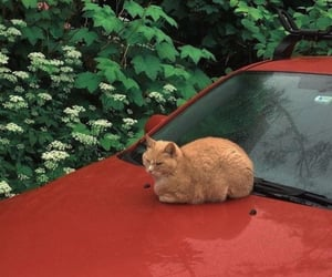 cat, red, and aesthetic image