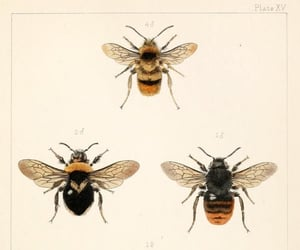 animals, bee, and bees image