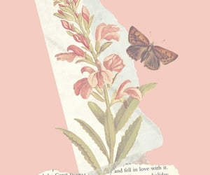 aesthetic, background, and butterfly image