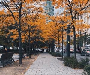 autumn, fall, and canada image