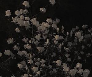 черный, цветы, and эстетика image