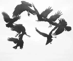 aesthetic, balck and white, and crow image