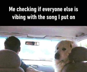 animals, lol, and songs image