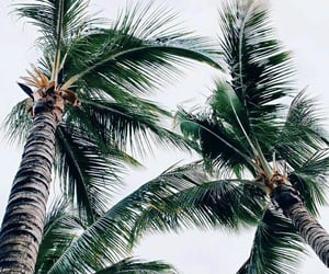 palmtrees, aesthetics, and nature image