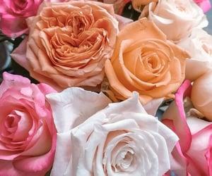 belleza, naturaleza, and flores image