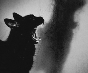 cat, shadow, and Darkness image
