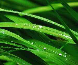 dew, green, and nature image