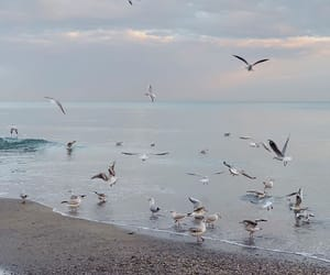 aesthetic, birds, and nature image