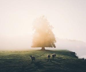 beautiful, photography, and tree image