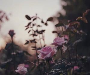 beautiful, flowers, and gloomy image