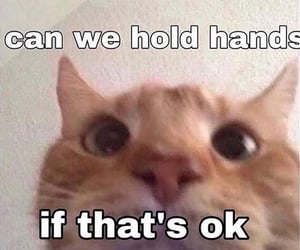 cat, holding hands, and humor image