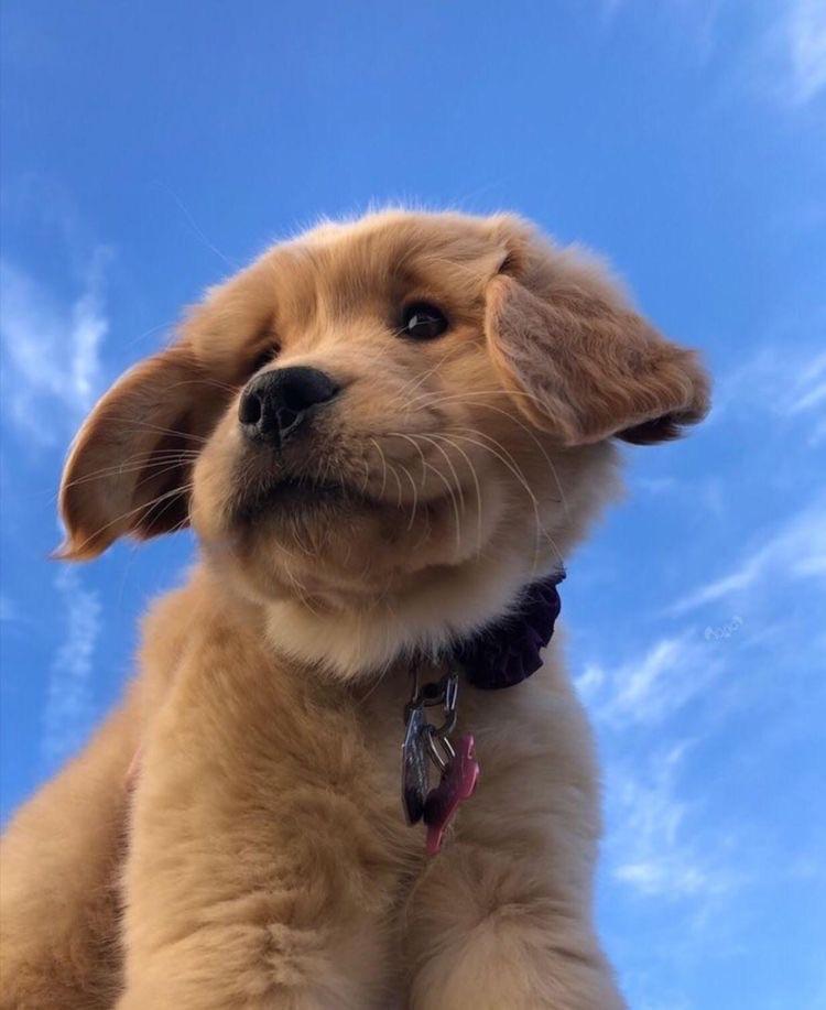 animal, dog, and sky image