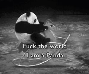 black and white, quotes, and panda image