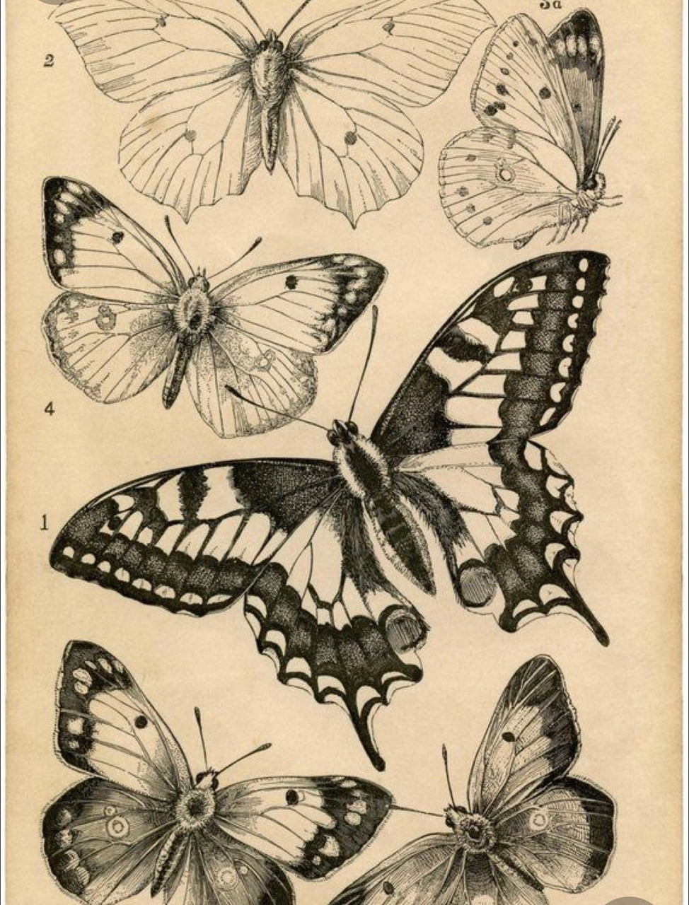 butterfly, art, and black image