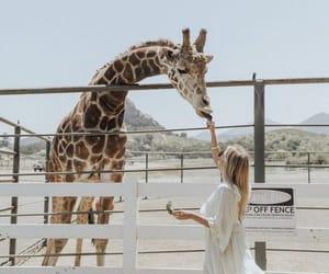 africa and safari image