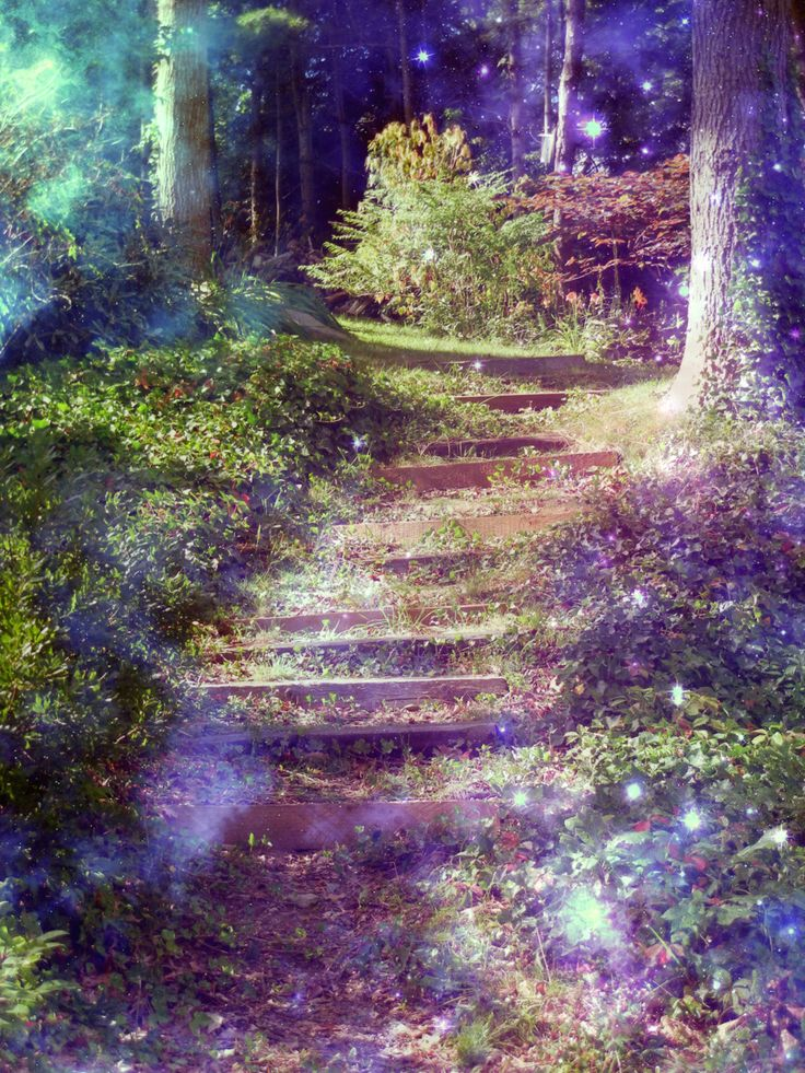 nature, forest, and magic image