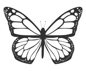 black, butterfly, and edit image