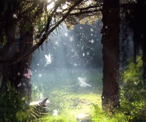 fairy and forest image