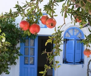 pomegranate and fruit image