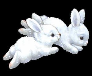 aesthetic, bunnies, and bunny image