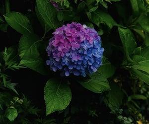 blue, flower, and magenta image