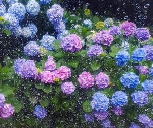 flower, hydrangea, and japan image