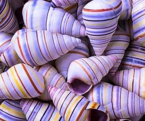 background, beautiful, and seashells image