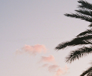 clouds, tropical, and palm tree image